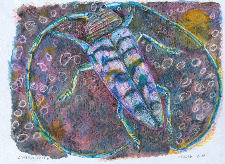 Longhorn Beetle 3