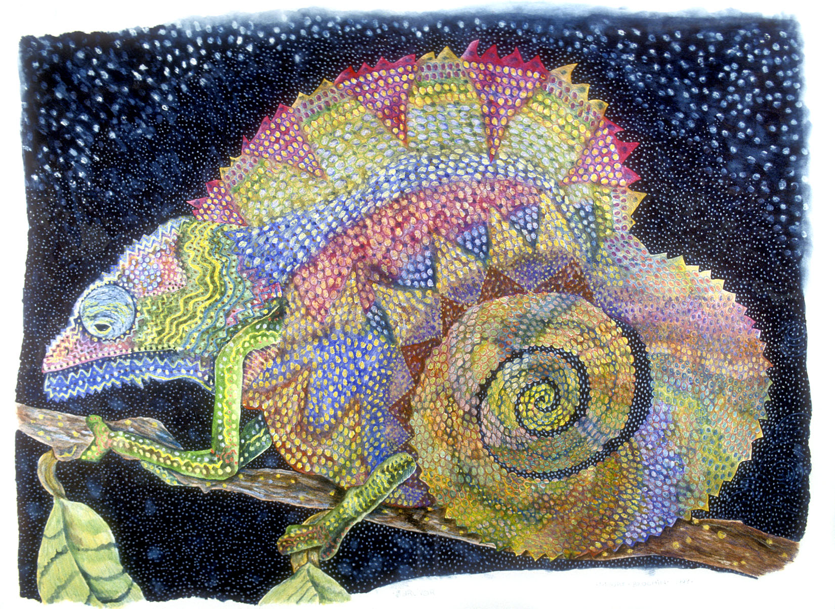 Passion (chameleon)